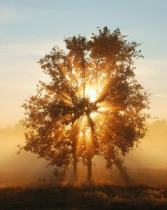 brilliance-tree